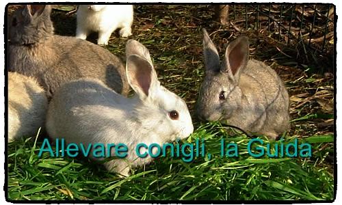 Allevare conigli